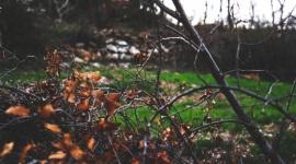 Jesienne przycinanie drzew i krzewów - 4 najważniejsze zasady Dom, LIFESTYLE - Wczesna jesień to ważny moment w kalendarzu każdego ogrodnika. Od jakości przeprowadzonych prac zależy bowiem późniejsza kondycja naszego ogrodu. Jedną z nich jest przycinanie drzew i krzewów.