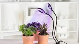 Sposób na piękne rośliny jesienią i zimą – znasz go? Dom, LIFESTYLE - Rośliny wymagają odpowiedniego oświetlenia o każdej porze roku. O ile wiosną czy latem wystarczają im promienie słoneczne, które wpadają do pomieszczenia, tak jesienią czy zimą należy zapewnić im dodatkowe źródło światła, dzięki któremu będą mogły się prawidłowo rozwijać.